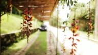 hanging flowering vine and carport video