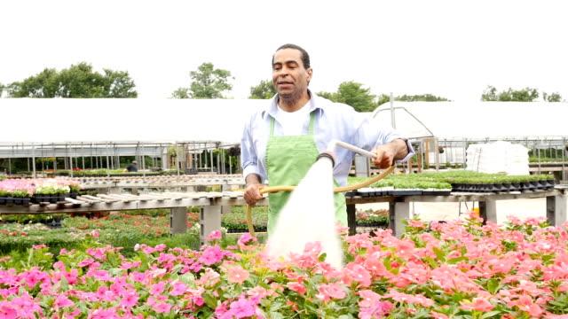 Happy African American garden center employee waters flowers video