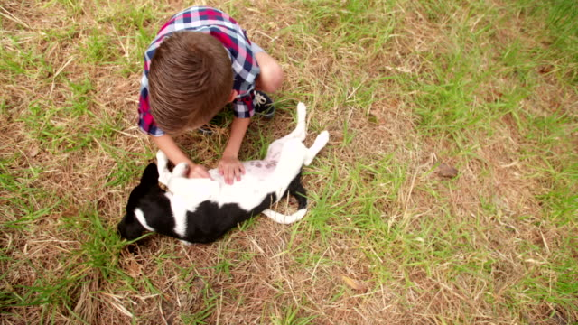 Happy boy and his puppy dog frolicking around in grass video