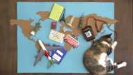 Happy cat making international travel plan on wooden desk video