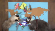 Happy cats making international travel plan on wooden desk video