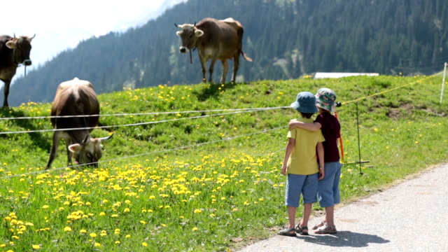 Happy children walking on a rural path in Swiss Alps, springtime, cows in the field video