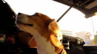 Happy dog on Pickup video