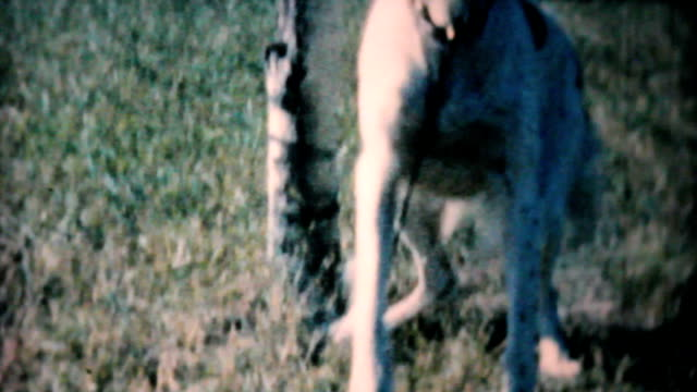 Happy Dog Wants To Play-1962 Vintage 8mm film video