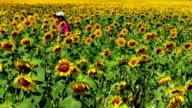 Happy girl running through field of sunflowers video