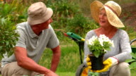 Happy grandmother and grandfather gardening video