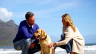 Happy mature couple petting their dog on the beach video