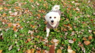 Happy playful dog jumping to reach food video