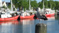 harbour and gull video