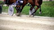 HD SUPER SLOW MO: Harness Horses Racing video