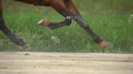 HD SUPER SLOW MO: Harness Racing Along Racecourse video