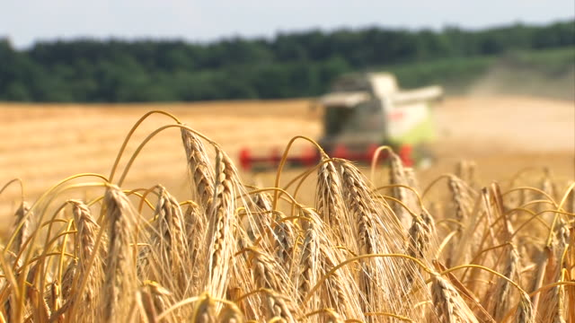 harvest - agriculture video