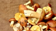 A harvest of mushrooms on the rough cloth panning video