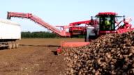 Harvest of sugar beet video