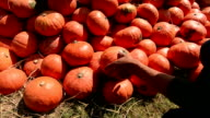 Harvest Pumpkin Farmer. video