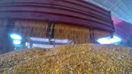 Harvested Corn Kernels Falling onto Camera Lens video