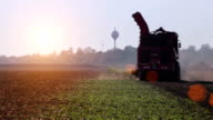 Harvester during harvesting of sugar beets video