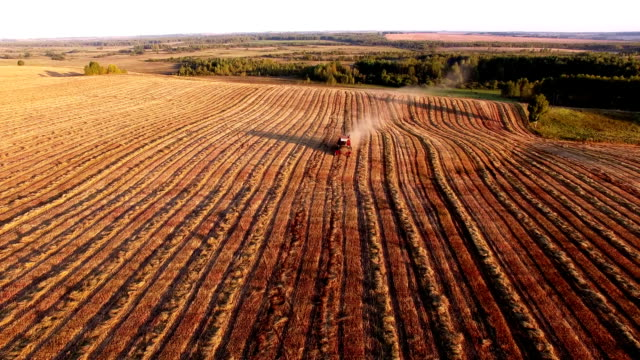 harvester in the field harvests - aerial view video