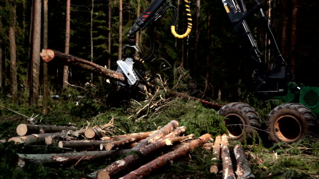 Harvester logging pine timber in the forest video
