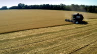 AERIAL: Harvester Mows the Field wheat video