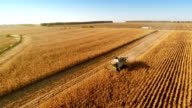 Harvesters Work on Cornfield video