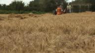 Harvesting a field of wheat HD 1080 video