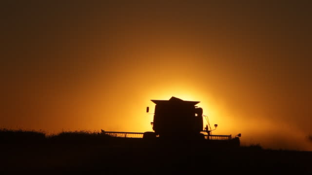 Harvesting at sunset video