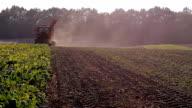 harvesting beet video