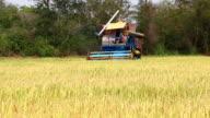 Harvesting rice video