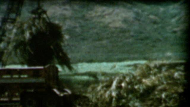 Harvesting Sugar Cane 1950's video