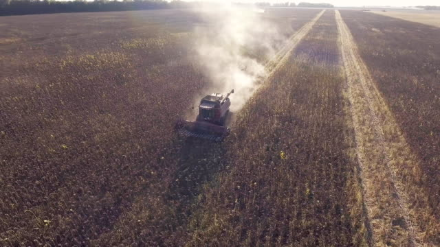 Harvesting sunflower. The camera flies around the combine, aerial video video