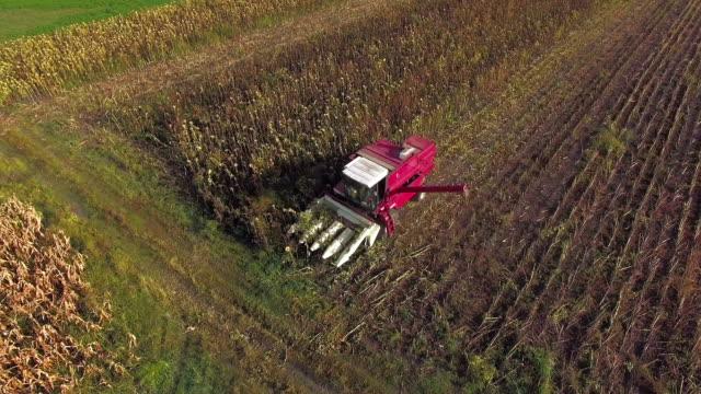 Harvesting sunflower with modern combine harvester video