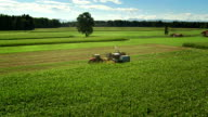 HD: Harvesting The Corn video