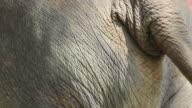 HD : Haunch of Elephant video