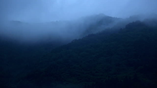 Haunting mists moving through a coniferous mixed forest after a rainstorm. Moderate time lapse. video