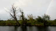 Havel river landscape (Brandenburg, Germany) with willow tree. rainbow video