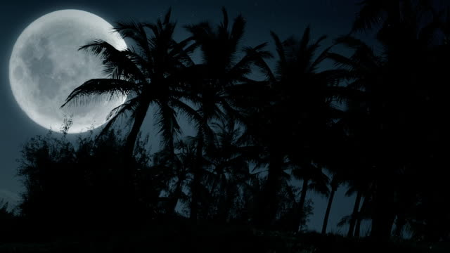 Hawaii Full Moon and Palm Trees video