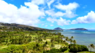 Hawaii Timelapse Clouds Over Palm Trees and Ocean video