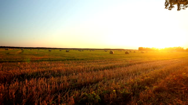 Hay Bales At Sunset video