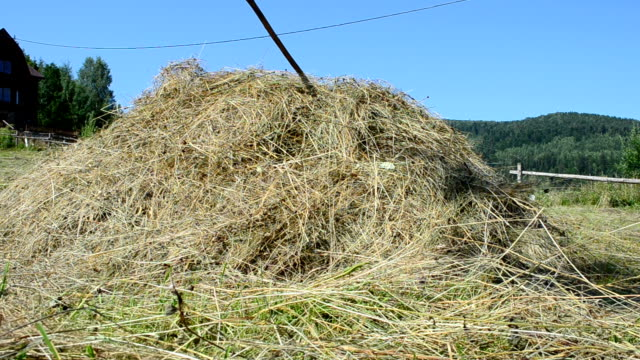 Hay on a meadow video