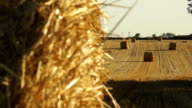 Haystacks on the field 1 video