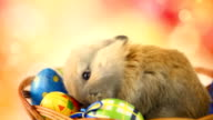HD1080:Easter bunny video