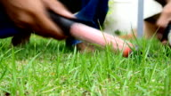 HD1080:Gardener Cutting The Grass With Scissors video