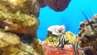 HD:Beautiful fish in Aquarium video