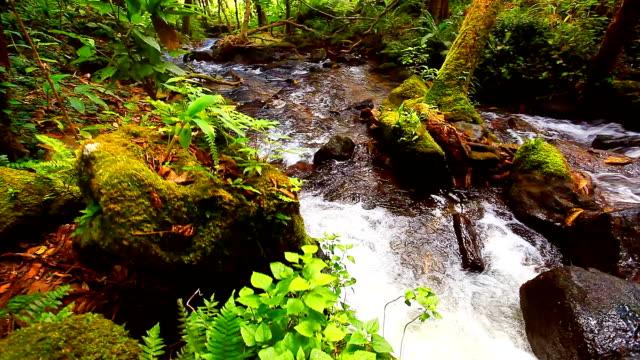 HD:Beautiful waterfall in nature.[Crane shot] video