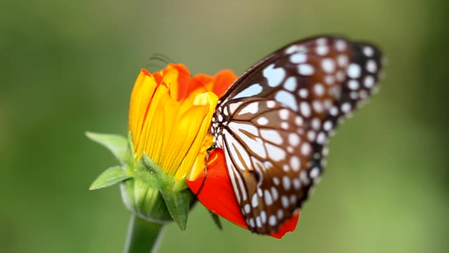 HD:Butterfly in nature. video