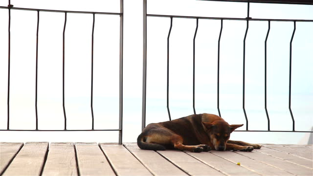 HD:Dog lying in the street video