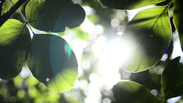 HD:Green leaves Nature background leaf with light at sunshine time video