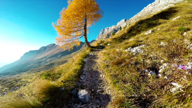 HD-Handheld: Shot of Beautiful Mountain Footpath in European Alps video
