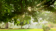 HD:Morning light sunbeam through the leaf on the tree. video